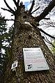 Protected forest (Bannwald) Untereck, Baden-Württemberg (2019).jpg