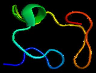 Metallothionein 2A