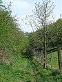 Public Footpath, Barnsley, Shropshire - geograph.org.uk - 409348.jpg