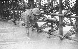 Putcher fishing - George Whittaker collecting salmon from putchers at Goldcliff, circa 1923