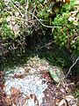 Quelle im Wald.jpg