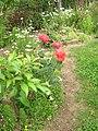 Rózsák - Roses - panoramio.jpg