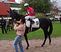 Race horse Touch of Hawk Täby 2010.jpg