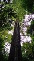 Rain forest 3.jpg