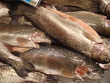 Photo of cleaned and iced rainbow trout in fish market
