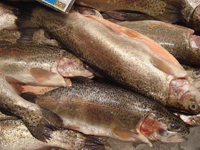 Rainbow-trout-in-market.jpg