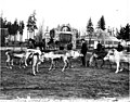 Reindeer with entrance to Woodland Park in background, Seattle, 1898 (SEATTLE 191).jpg