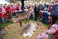 Reindeers, awaiting Santa, Hexham - geograph.org.uk - 1617727.jpg