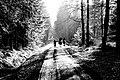 Reiter im Wald - Riding.jpg