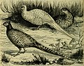 Reptiles and birds - a popular account of their various orders, with a description of the habits and economy of the most interesting (1883) (14565707100).jpg