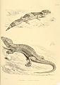 Reptiles of British India (3).jpg