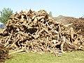Restholz von Wurzeln in Schweden.jpg