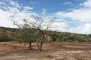 Rinca - Image: Rinca at dry season