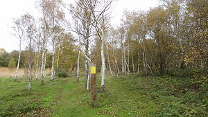 Ripple Nature Reserve - Silver Birch Wood