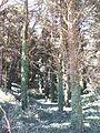 """Riserva Naturale Orientata """"Monte Bonifato"""" (Alcamo) 07.jpg"""
