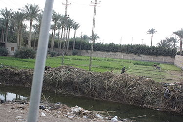 Roadside in Memphis, Egypt.jpg