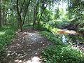 Robert Simpson Nature Trail 04.JPG