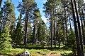 Rovaniemi, Finland (16) (36515914242).jpg
