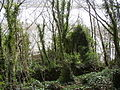 Ruin in the woods, Laugharne - geograph.org.uk - 469642.jpg