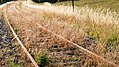 Rusty tracks turned to gold by evening sun 4.jpg