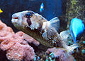 Särkänniemi - fish 9.jpg