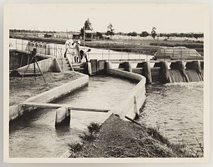Irrigation in Australia - Irrigation in New South Wales during the 1920s