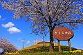 Sakuranoyama Park.JPG