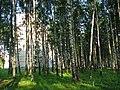 Salaspils, Salaspils pilsēta, Latvia - panoramio - alinco fan (3).jpg