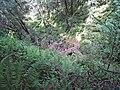 Samuel Taylor State Park. Footbridge over Devils Gulch. - panoramio.jpg