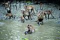 Samutsongkram Khlong Khone Mangrove Forest 2.jpg