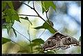 Saturniidae (6812290906).jpg