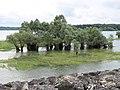 Saules au lac du Temple