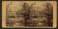 Scene on the Oklawaha River, Fla, from Robert N. Dennis collection of stereoscopic views.png