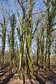 Schleswig-Holstein, Kellinghusen, Naturerlebnisraum Rensinger See NIK 1790.JPG