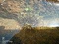 Sea anemone 2.jpg