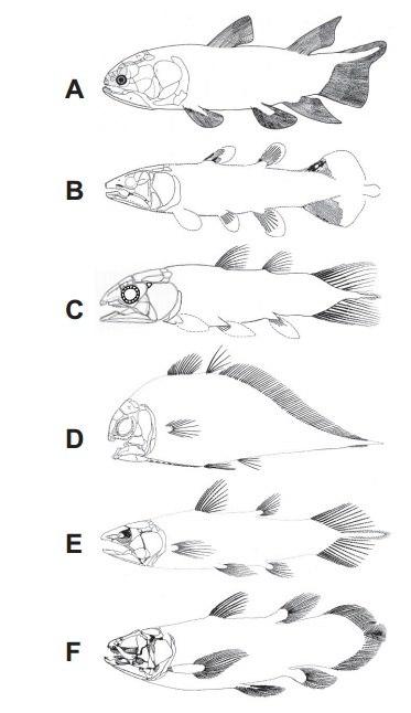 Serenichthys kowiensis00