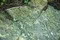 Serpentinite (East Dover Ultramafic Body, Ordovician; roadcut southwest of East Dover, Vermont, USA) 3.jpg