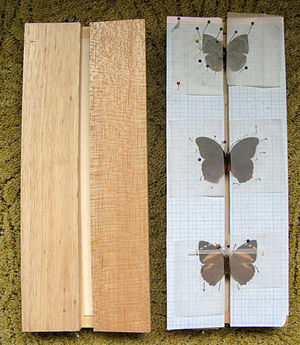 Entomological equipment for mounting and storage - Setting boards