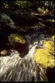 Shenandoah National Park SHEN9159.jpg