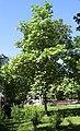 Shevchenko park Kiev8.jpg