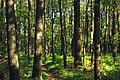 Short Hike (1) (9704305673).jpg