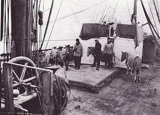 Terra Nova Expedition - Ponies on board Terra Nova