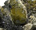 Siderite-Pyrite-Stannite-261597.jpg