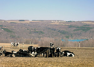 Skaneateles (town), New York - High pasture, west side of lake
