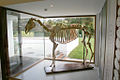 Skeleton of Arkle the horse at the Irish National Stud.jpg