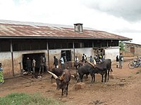 Slaughterhouse - Abattoir (6346822191).jpg