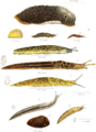 Slugs 1896.png