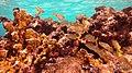 Snorkeling Windsock Steep, Bonaire (12998322974).jpg