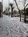 Snow in Shiraz, Lotf Ali Khan Zand St, برف در خیابان لطفعلی خان زند شیراز - panoramio.jpg