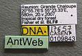 Solenopsis mameti casent0109843 label 1.jpg